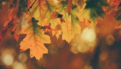Autumn maintance